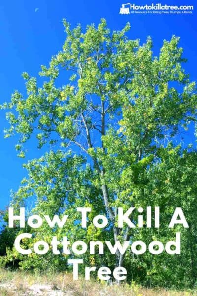 How To Kill The Most Common Trees Pine Palm Oak Amp More