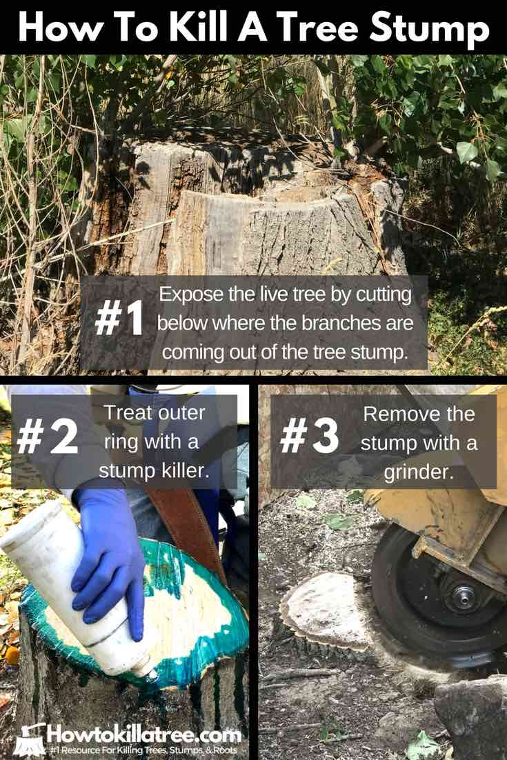 how to kill a tree, stump grinder, stump removal, stump killer, how to remove a tree stump, how to get rid of tree stumps, how to kill tree stumps
