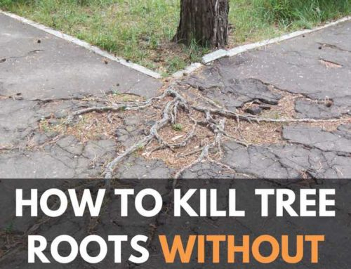 How To Kill Tree Roots Without Killing Tree (Sewer, Yard, and Driveway)