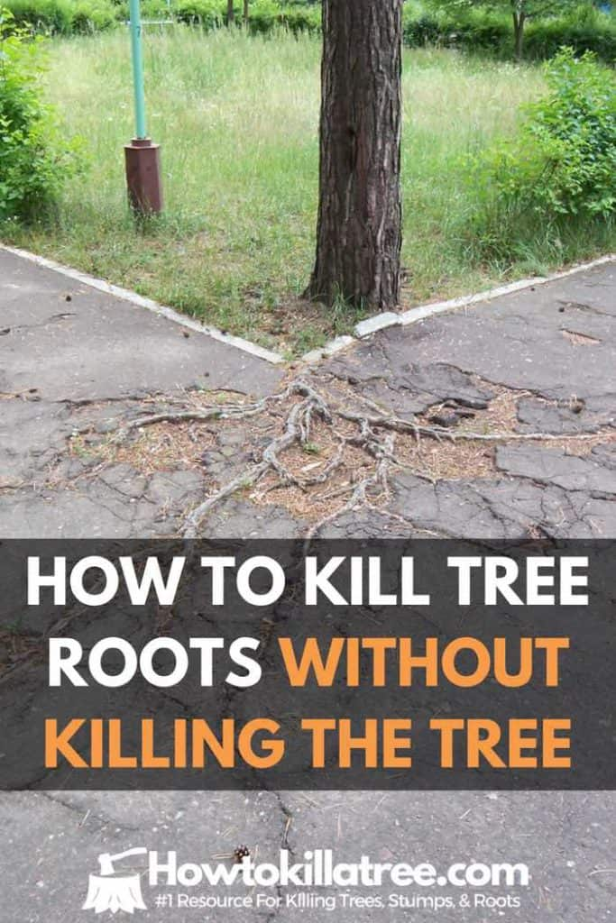 How To Kill Tree Roots Without Killing Tree Sewer Yard