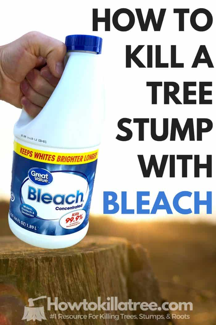 Killing Tree Stumps With Bleach (Does It Work?) - Backyardables