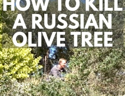 How To Kill Weed Trees Fast - Backyardables