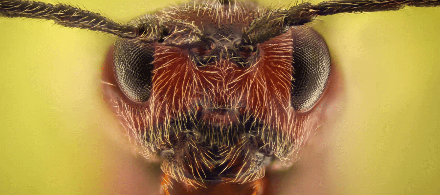 close up of ant head