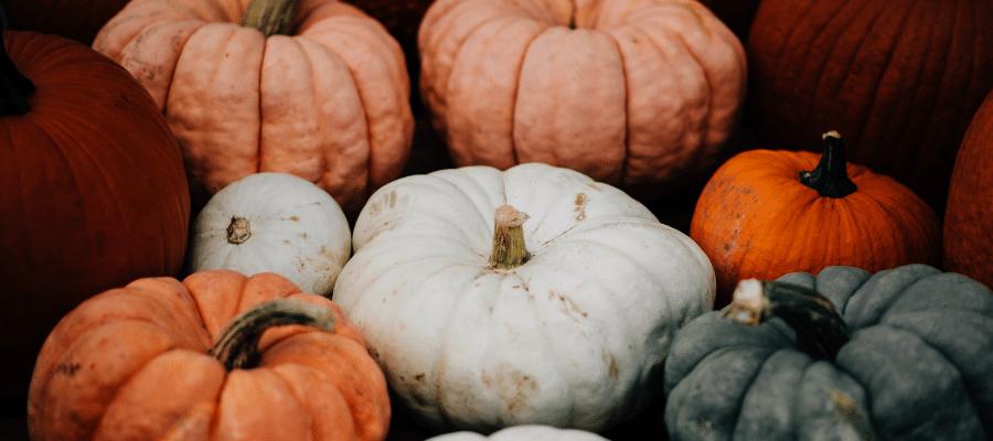 Several different colored pumpkins