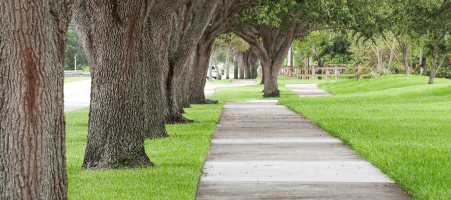 Sidewalk path lined with trees and grass