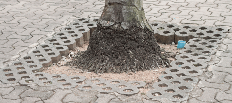 Tree trunk surrounded by pavers